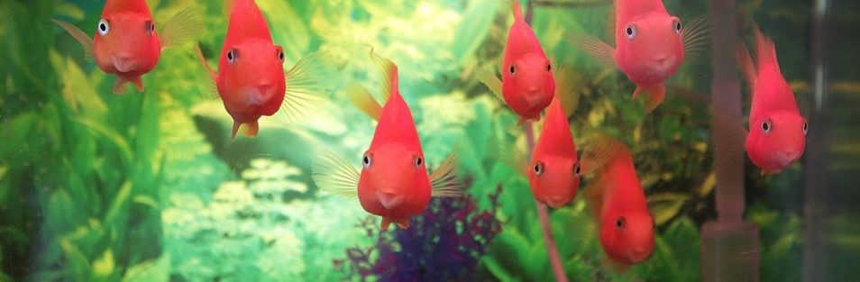Fish tanks and Aquariums: A Clean and Safe Habitat for our Fish.